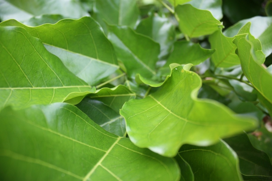 Gröna blad.jpg